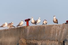 A flock of seagulls on the breakwater. Stock Photography