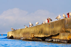 A flock of seagulls on the breakwater Stock Image