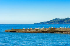 A flock of seagulls on the breakwater. Stock Photos