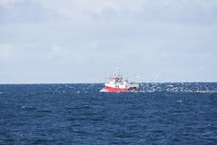 Flock of seagulls chasing a trawler fishing for cod at Andenes Royalty Free Stock Image