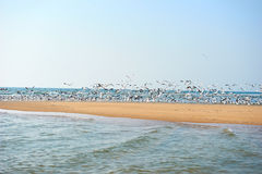A flock of seagulls Stock Images