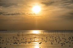 Flock of seagulls emigrate on sea gulf of thailand Stock Photo