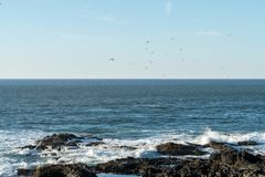 Flock of seagulls flies over the water in search of fish while the waves break into the rocks royalty free stock photo