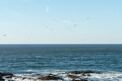 Flock of seagulls flies over the water in search of fish while the waves break into the rocks stock photography