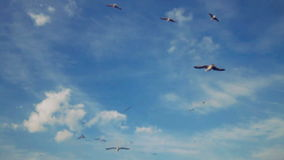 Flock of Seagulls Fly Over in Blue Sky stock video