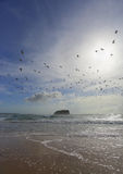 Flock of seagulls fly overhead at Mystics Beach Stock Photo
