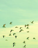 Flock of seagulls. Flying over the beach Royalty Free Stock Photos