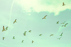 Flock of seagulls. Flying over the beach Royalty Free Stock Photo