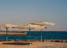 Flock of seagulls flying over the beach with thatched umbrellas Royalty Free Stock Photo
