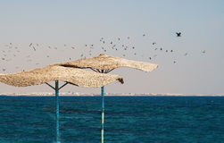 Flock of seagulls flying over the beach with thatched umbrellas Stock Photo