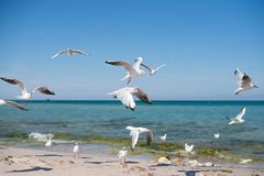 A flock of seagulls flying over the coast on a sunny day stock photography