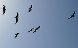 A flock of seagulls flying over the sea Royalty Free Stock Photography