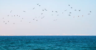 Flock of seagulls flying over the sea Royalty Free Stock Photos