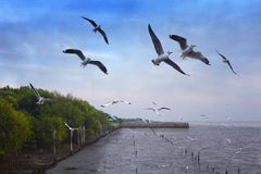 Flock of Seagulls Flying. royalty free stock photography