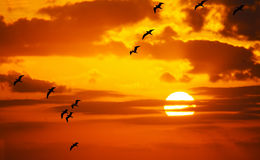 Flock of seagulls flying in the sun Royalty Free Stock Photo