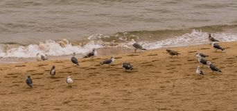 Seagulls gathered on sandy beach Stock Image