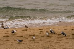 Seagulls on sandy beach Royalty Free Stock Images