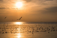 Flock of seagulls migrate on sea gulf of thailand. In the evening Royalty Free Stock Image