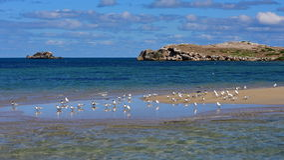 Flock of seagulls Stock Image