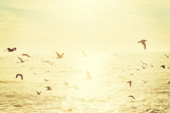 Flock of seagulls in San Diego Stock Image