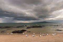 Flock of seagulls on sandy beach Stock Photos