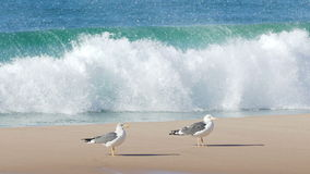 Flock of Seagulls Sitting on the Beach Ocean with Waves stock footage