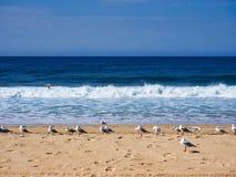 Flock of Seagulls Standing on Yellow Sand pacific Ocean Beach, Australia. stock photo
