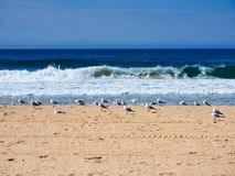 Flock of Seagulls Standing on Yellow Sand pacific Ocean Beach, Australia. stock images