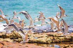 Flock of seagulls taking off stock photos