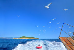 Flock of seagulls trailing the tourist boat, Skiathos, Greece royalty free stock photo
