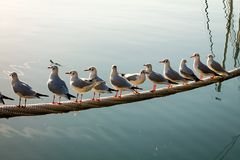 Flock of seagulls waiting in harbor for fish. stock image