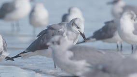 Flock Of Seagulls stock video