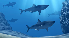 Flock of sharks underwater with sun rays and stones in deep blue sea Stock Image