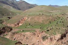 The flock of sheep. On hill in Tajikistan Stock Photos