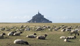 Flock of sheep in front of the Mont Saint Michel abbey. Mont Saint-Michel, Normandy, France. royalty free stock photos