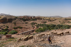 Flock of sheep & goats in the Atlas Mountains Stock Image