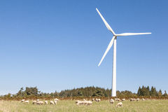 Flock of sheep grazing below a wind turbine  in an agricullture Stock Images