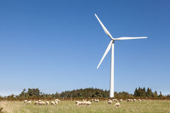Flock of sheep grazing below a wind turbine  in an agricullture Royalty Free Stock Photos