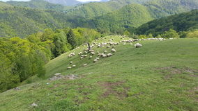A flock of sheep grazing the green grass in the mountains Stock Photography