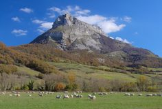 Flock of sheep grazing, Navarra Stock Images