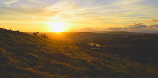 Flock of sheep grazing at sunrise Royalty Free Stock Images