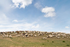 Flock of sheep on hill. Flock of sheep and goats on hill stock photo