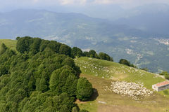 Flock of sheep on mountain meadows, Orobie, Italy Royalty Free Stock Images