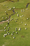 Flock of sheep on mountain pastures vertical Royalty Free Stock Photo