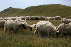 Sheep grazing the grass on mountain peaks Royalty Free Stock Photos