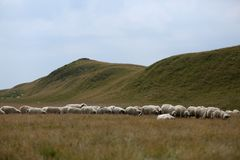 Sheep on mountain peaks, full portrait Royalty Free Stock Images