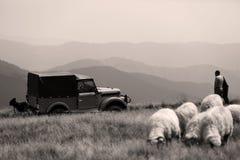 Sheep on mountain peaks, 4x4 vehicle Royalty Free Stock Photography