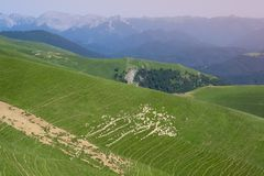 Flock of sheep on the mountain slope