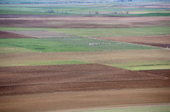 Flock of sheep on the plain. A flock of sheep grazing in the plains of Castile Royalty Free Stock Photos