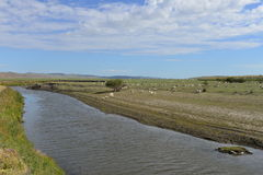 The Flock of sheep by the riverside of Mergel in the Hulun Buir Grassland Stock Photo
